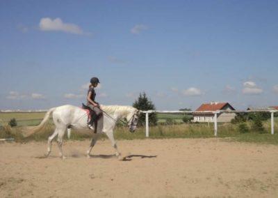 oboz-konie-2011-0103