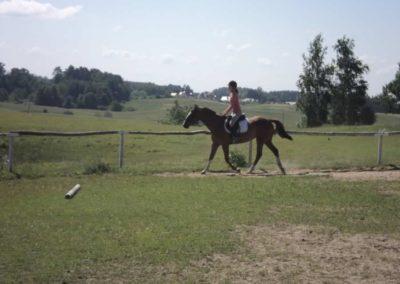 oboz-konie-2011-0104