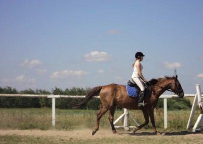 oboz-konie-2011-0106