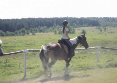 oboz-konie-2011-0108
