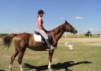 oboz-konie-2011-0111