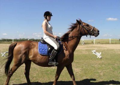 oboz-konie-2011-0112