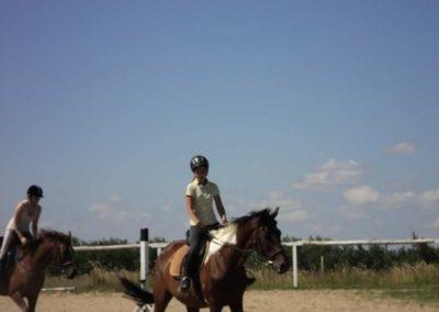 oboz-konie-2011-0119