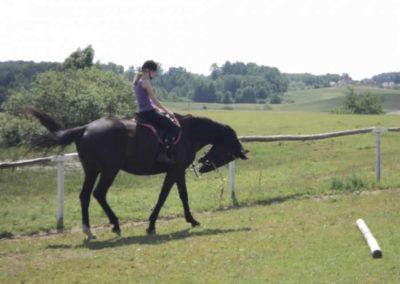 oboz-konie-2011-0123