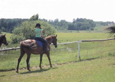 oboz-konie-2011-0124