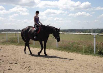 oboz-konie-2011-0127