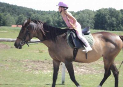 oboz-konie-2011-0137
