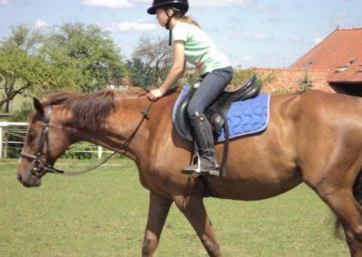 oboz-konie-2011-0138