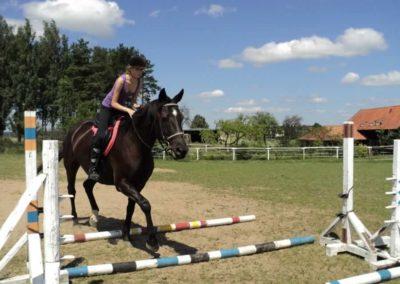 oboz-konie-2011-0140