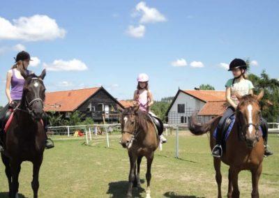oboz-konie-2011-0143