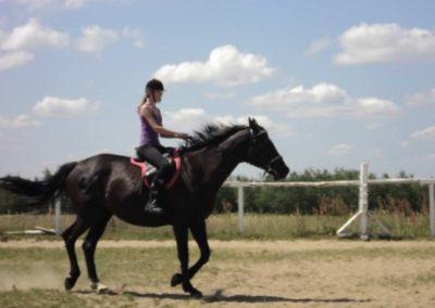 oboz-konie-2011-0144