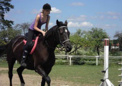 oboz-konie-2011-0145