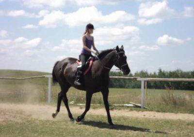 oboz-konie-2011-0147