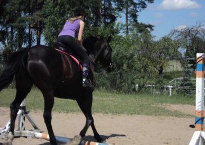 oboz-konie-2011-0148