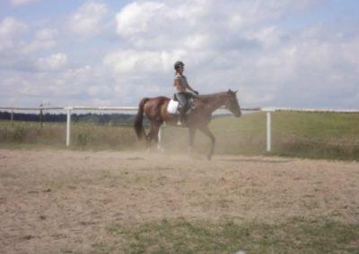 oboz-konie-2011-0151