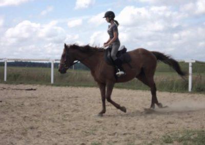 oboz-konie-2011-0154
