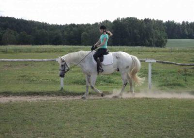 oboz-konie-2011-0155