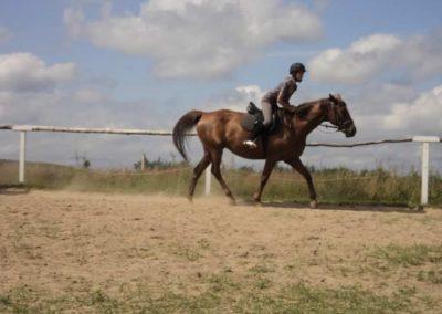 oboz-konie-2011-0156