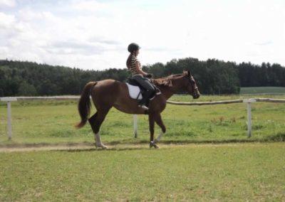 oboz-konie-2011-0157