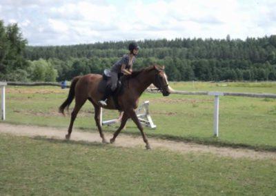 oboz-konie-2011-0160