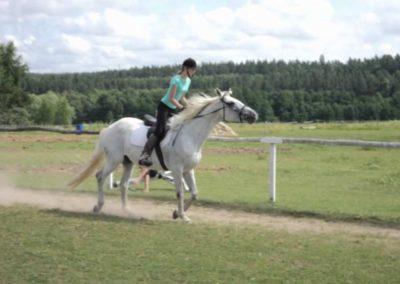 oboz-konie-2011-0161