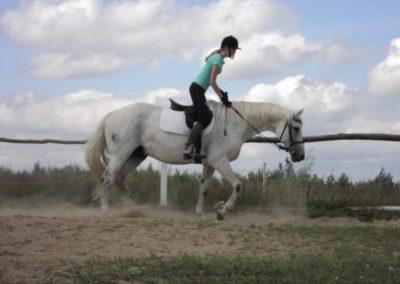 oboz-konie-2011-0163