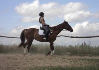 oboz-konie-2011-0164