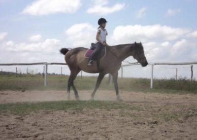 oboz-konie-2011-0165