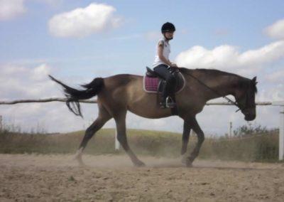 oboz-konie-2011-0166