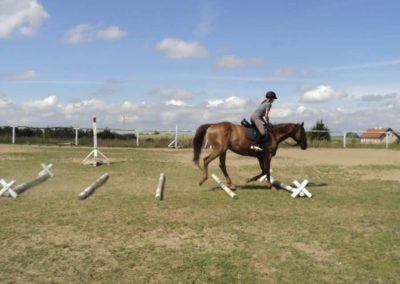 oboz-konie-2011-0170