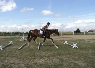 oboz-konie-2011-0171