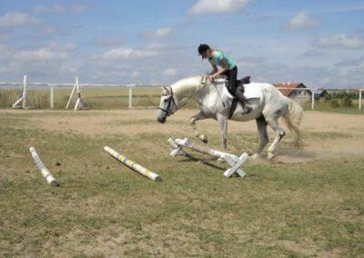 oboz-konie-2011-0183