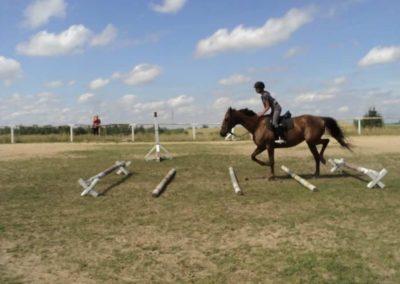 oboz-konie-2011-0184