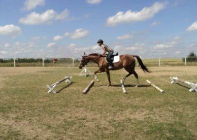 oboz-konie-2011-0185