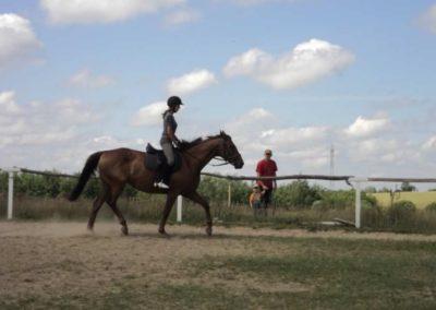 oboz-konie-2011-0187