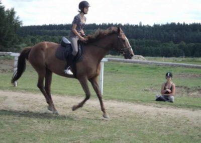 oboz-konie-2011-0188