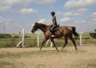 oboz-konie-2011-0190