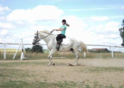 oboz-konie-2011-0191