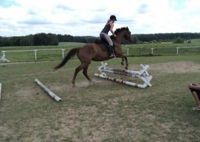 oboz-konie-2011-0194
