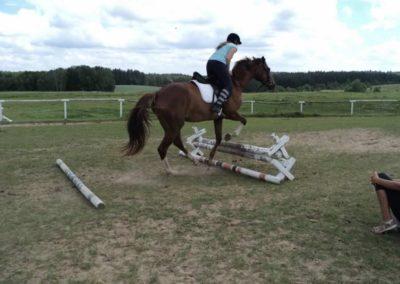 oboz-konie-2011-0195