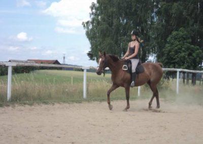 oboz-konie-2011-0200