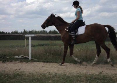 oboz-konie-2011-0201