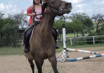 oboz-konie-2011-0202