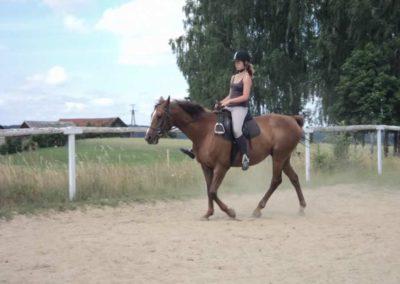 oboz-konie-2011-0203