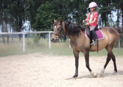 oboz-konie-2011-0204