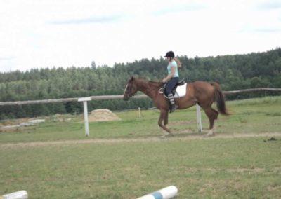 oboz-konie-2011-0205