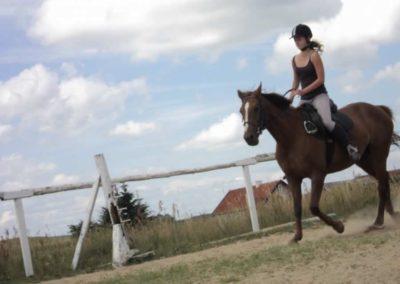 oboz-konie-2011-0206