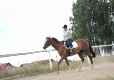 oboz-konie-2011-0207