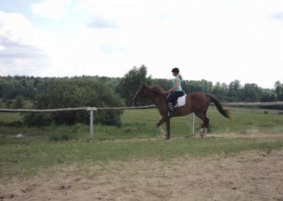 oboz-konie-2011-0209