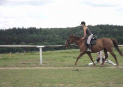 oboz-konie-2011-0211